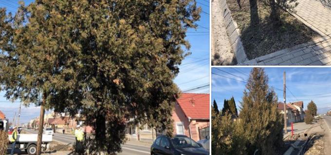 La Sebeș, se amenajează spațiile verzi pe artera principală din cartierul M. Kogălniceanu